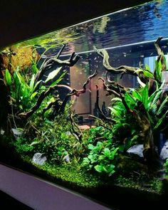 Making an aquascape on your home will help you a lot and it's so fun! Terrariums, Aquarium Terrarium, Aquarium Setup, Nature Aquarium, Home Aquarium, Tropical Aquarium, Aquarium Design, Planted Aquarium, Tropical Fish