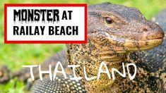 Thailand Large Monitor Lizard at Railay Beach. Home Lizard, Railay Beach Thailand, Underground Reptiles, Lizard Tattoo, Small Dog Sweaters, Monitor Lizard, Border Collie Mix, Medical Technology, Dog Walking