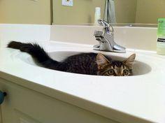 the sink ninja