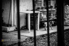 Puppy Look by Raul Sanchez