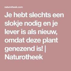 Je hebt slechts een slokje nodig en je lever is als nieuw, omdat deze plant genezend is! | Naturotheek