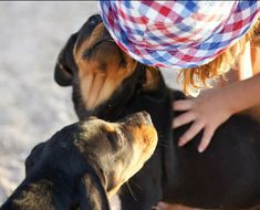 Rottweilers, Luxury Life, Puppies, Dogs, Animals, Instagram, Luxury Living, Cubs, Animales