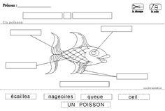 Fiche maternelle sur le poisson et sa physiologie. Descrition biologique.