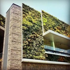 trend haus fassade begrünen naturstein verkleidung balkon