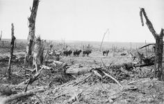 WW1, 14 Sept 1916, Somme; Scene on the outskirts of Delville Wood. © IWM ( Q…