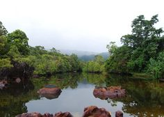 Masoala National Park is Madagascar's largest park and one of its least visited. Primary rainforest covers a range of mountains and drops down to the deserted beaches of Antongil Bay where hump-backed whales come to breed and calve.