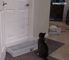 clever-cat-crossing-water-obstacle-while-opening-door