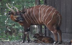 """New """"Re-Zoo-Dents"""" At Henry Doorly Zoo.  Check out photos of the new """"babies"""" at wowt.com."""