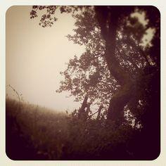 Field in the Mist 2