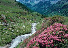 Trentino - Val di Peio