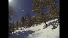 Mueller State Park Snowshoeing Trail 33 Loop 3 27 2016 Sq  30