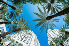 Photo about Beautiful Miami Beach fish eye cityscape with palm trees and art deco architecture. Image of building, skyline, resorts - 37659173 Miami Beach, West Palm Beach, Miami Florida, South Beach, South Florida, Palm Tree Art, Palm Trees, Art Deco Hotel, Florida Travel