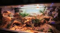 Feeding Your Bearded Dragon In The Right Way Bearded Dragon Vivarium, Bearded Dragon Enclosure, Bearded Dragon Terrarium, Bearded Dragon Cage, Bearded Dragon Habitat, Bartagamen Terrarium, Snake Terrarium, Reptile Habitat, Reptile Room