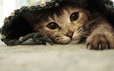 #gato #gatinho #cat #cats #animais #fofo