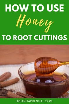 Using Honey to Propagate Cuttings - Using Honey to Propagate Plants – If you're an organic gardener or just want to avoid chemicals in the garden, honey is a great natural substitute for rooting hormone when propagating plants. Rose Cuttings, Succulent Cuttings, Plant Cuttings, Rose Propagation, Succulents, Honey Uses, Rooting Roses, Honey Benefits, Honey Recipes