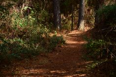 Nature trail in Huntington State Park - Myrtle Beach, SC