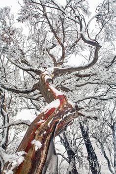 Sky in the snow, Mount Buller, Victoria