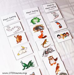 Categorize into herbivore, carnivore, and omnivore: Free Food Chain Activity Cards from STEMmom.org