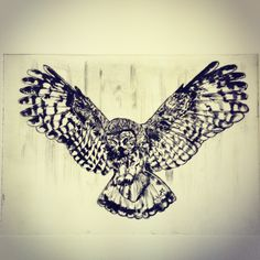 Second owl