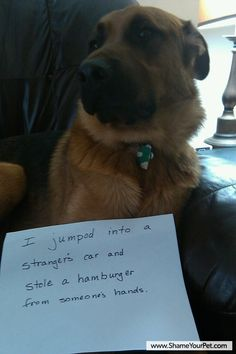 I jumped into a stranger's car and stole a hamburger from someone's hands.