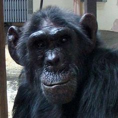 Charlie at Monkey World... RIP <3 XO :-(