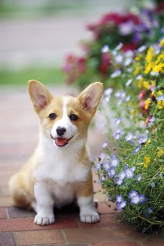 Omg , he is so small and cute. Lovely puppy smaller than grass and flowers