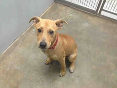 ***URGENT ON EUTH LIST WED 8-14-13***  MOBILE, ALABAMA! LENA- ID#A050862 This baby girl just wants to be loved. Lena is a 6 month old Carolina Dog mix who is looking for a forever family!  She has been at the facility since July 22, 2013.   Mobile County Animal Shelter 7665 Howells Ferry Rd Mobile, AL 36618  https://www.facebook.com/photo.php?fbid=556888827697740=a.193103557409604.60105.193102227409737=1_count=1