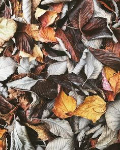 Autumn mostly on the ground now! I was so sad to see someone sweeping the leaves away yesterday. Leave the leaves please I want to crunch my feet on them