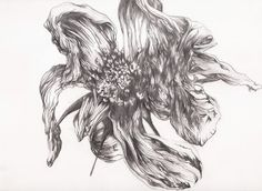 Big studies of decaying flower heads