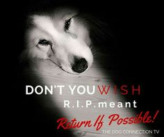 It's so difficult to say goodbye to someone who has been such a loyal and loving companion. I sure wish R.I.P. (Rest In Peace) meant ❤️Return If Possible❤️  Photo Credit: Pinterest Dog Lovers ➡️ PETograph by Picture A Moment Pet Productions LLC  Share If You Care ⬇️⬇️⬇️⬇️⬇️⬇️  Dogs Today Magazine Association for Pet Loss and Bereavement Dealing with the              Loss of a Pet Rainbow Bridge Rainbow Bridge ~ Celebration of our beloved pets lives
