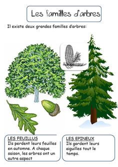LES ARBRES Science Projects For Kids, Science For Kids, Science And Nature, Shinrin Yoku, Kids Things To Do, Primary Science, Montessori Activities, Learn French, Horticulture
