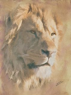 Portrait of a Male African Lion - Animals