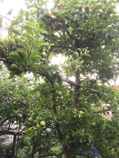 appels in overvloed