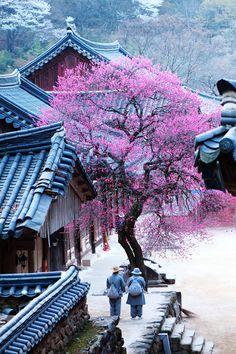 Asian Landscape, House Landscape, Korea Tourist Attractions, Old Pictures, Travel Pictures, Zen Place, Aesthetic Japan, Ocean Wallpaper, Landscape Photography