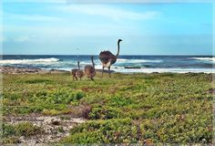 Guided Overnight hike at Cape Point. Walk for 2 days through the Cape of Good Hope Nature Reserve. Comfortable accommodation with great views. Nature Reserve, Great View, Trek, Cape, Coastal, Hiking, Animals, Mantle, Walks