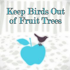 Outdoor and Gardening with Red Hill: How to Keep Birds out of Fruit Trees Outdoor and Gardening with Fruit Garden, Garden Trees, Edible Garden, Lawn And Garden, Growing Fruit Trees, Tree Care, Garden Pests, Trees And Shrubs, Dream Garden