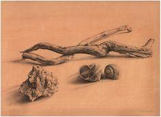 Still Life - Francesco Amatori                       Pencil  Tempera