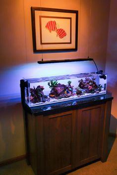 Click this image to show the full-size version. Seahorse Aquarium, Marine Aquarium Fish, Coral Reef Aquarium, Nano Aquarium, Home Aquarium, Aquarium Design, Saltwater Fish Tanks, Saltwater Aquarium, Planted Aquarium
