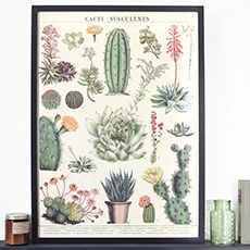 Cactus and succulentes vintage art print / poster by Cavallini & Co. Inspired by the botanic plate that can be found in some old natural science book.