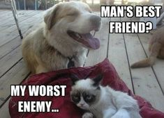 Funny grumpy cat memes