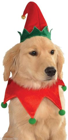 Christmas Elf Hat & Collar Set for Dogs Dog Festive Holiday Costume Bell Adjusts