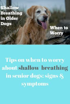Tips on when to worry about shallow breathing in senior dogs- signs & symptoms