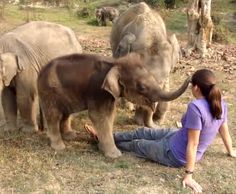 play with baby elephants
