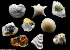 "Sand magnified 250x ""Incredible: To think we are walking on 'these tiny treasures'"""