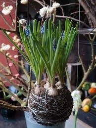 string gardens - Google Search