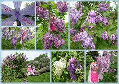 Сиреневое настроение в Сиреневом саду! Фиолетовой, белой, лиловой, Ледяной, голубой, бестолковой Перед взором предстанет сирень.