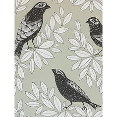 Buy Blue Jay MissPrint Songbird Wallpaper from our Wallpaper range at John Lewis & Partners. Cover Wallpaper, Photo Wallpaper, Pattern Wallpaper, Blue Jay, Wallpaper Online, Hand Illustration, Pigment Ink, Nocturne, Wallpapers