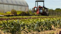 What's Happening With The Farm Bill? - Garden Collage Magazine