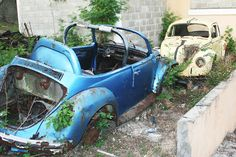 Two old beetles left to rust. No, it's not about Paul and Ringo.