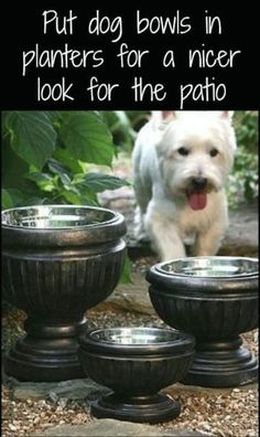 On How To Train Your Dog Successfully Put dog bowls in planters for a nice look for the patio!Put dog bowls in planters for a nice look for the patio! Garden Care, Potager Bio, Dog Water Bowls, Dog Rooms, Dog Care, The Great Outdoors, Dog Training, Training Tips, The Best